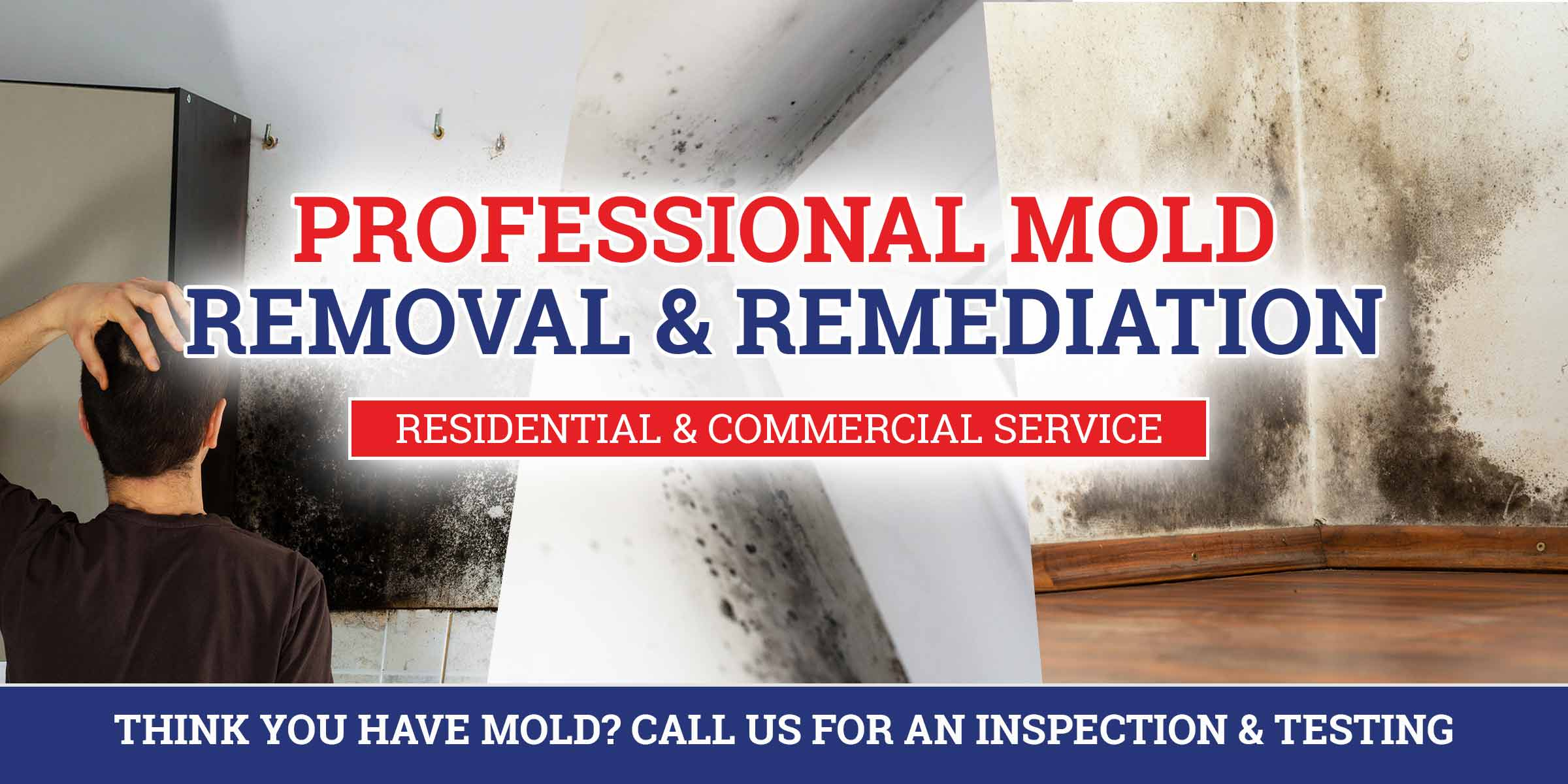 professional mold remediation