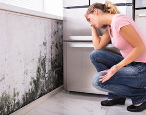 black mold removal and remediation